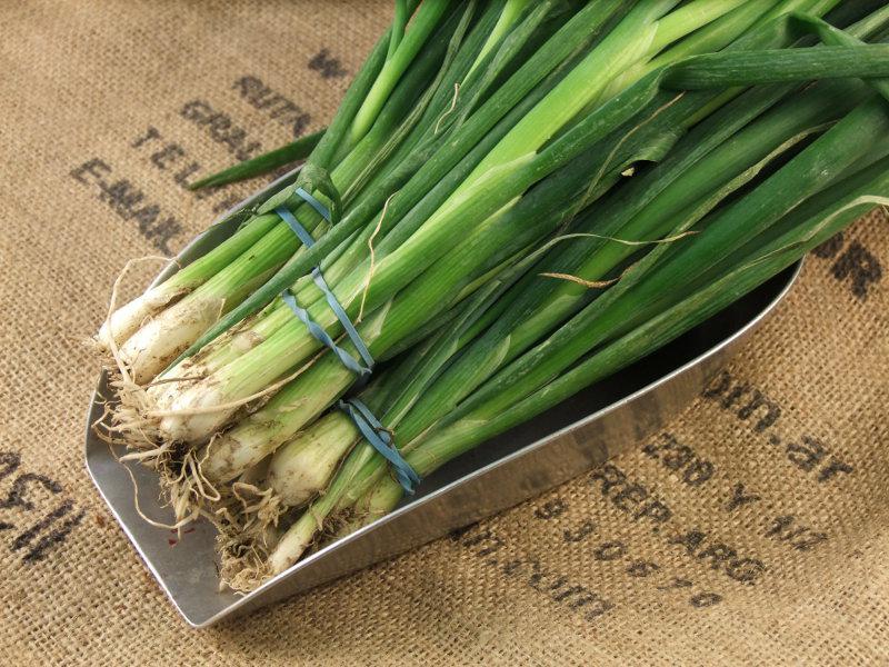 Salad Onions ORGANIC