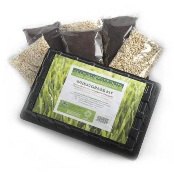 Wheatgrass Growing Kit ORGANIC