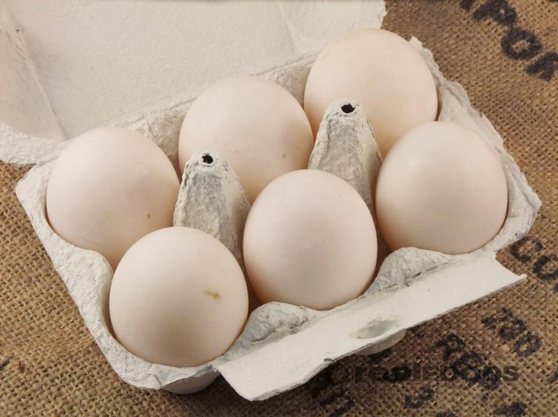 Duck Eggs  image 2