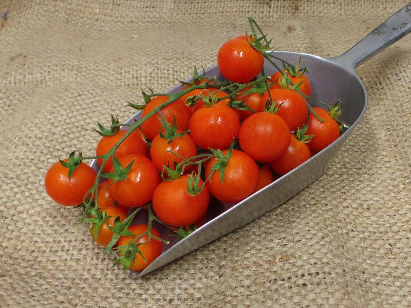 Packaged Cherry Tomatoes on the vine ORGANIC