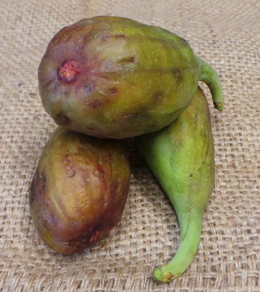 Figs ORGANIC