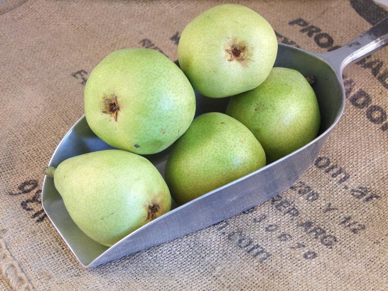 DeAnjou Pears ORGANIC