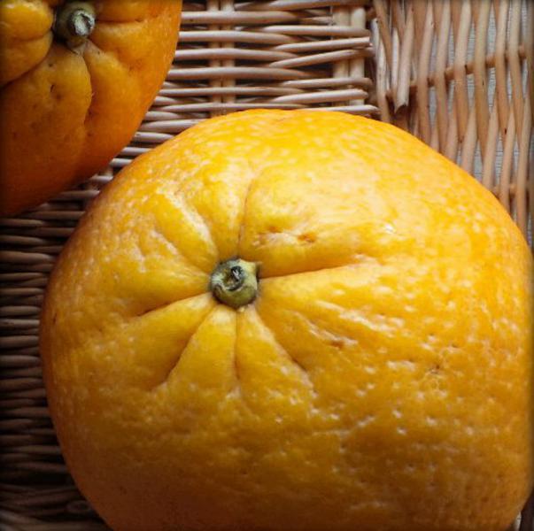 Orange Extra Large ORGANIC