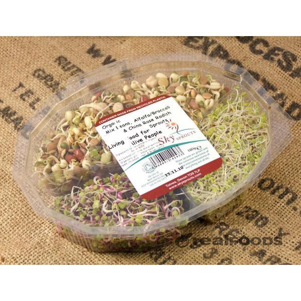 Alfalfa,Radish & Mixed Bean Sprouting Mix ORGANIC