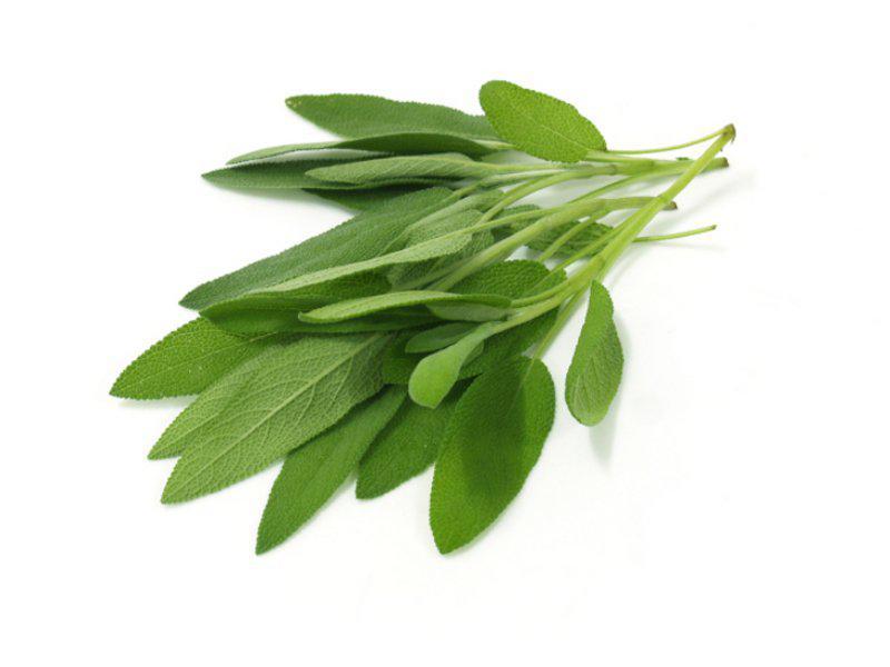 Fresh Sage UK ORGANIC