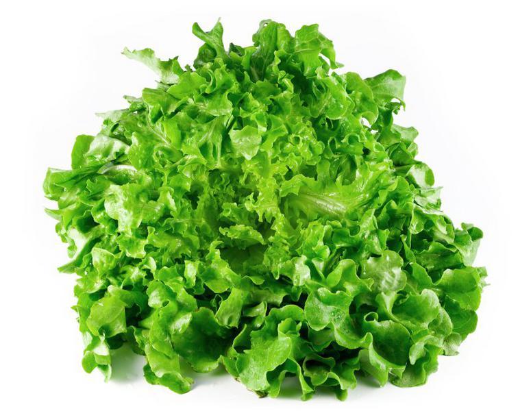 Lollo Biondi Lettuce ORGANIC