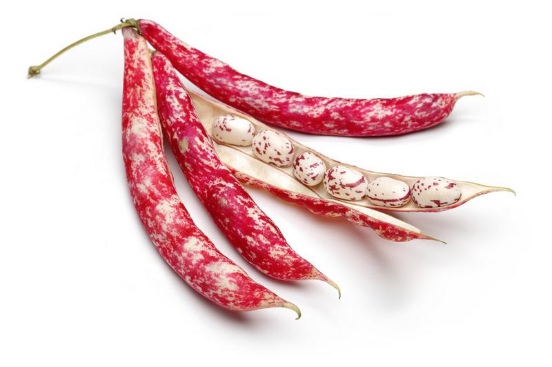 Organic Borlotti Beans In Kilos From Real Foods