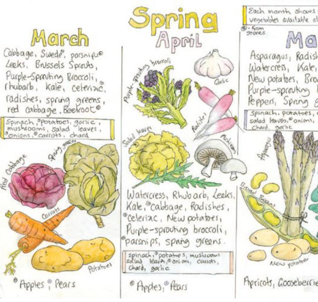 Seasonal fruit and vegetable wallchart from liz cook