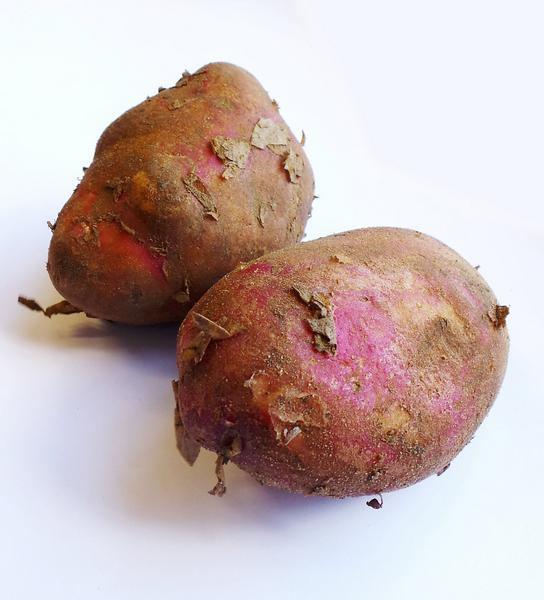 Amarosa Potato ORGANIC