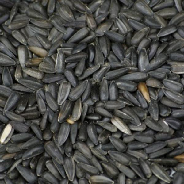 organic black sunflower seeds uk organic sunflower seeds black from real foods buy bulk
