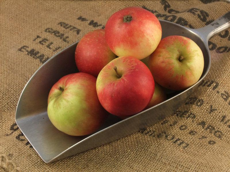 Apples Discovery ORGANIC