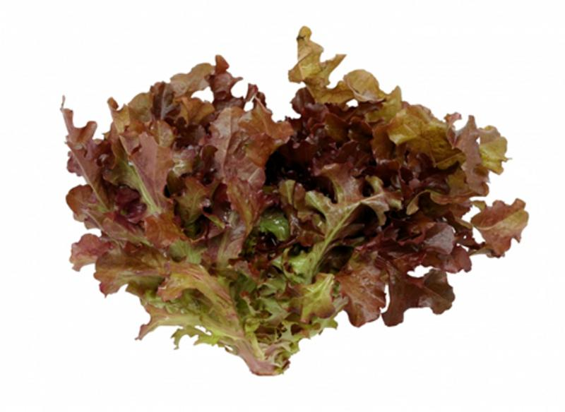 Organic Lollo Rosso Lettuce From Real Foods
