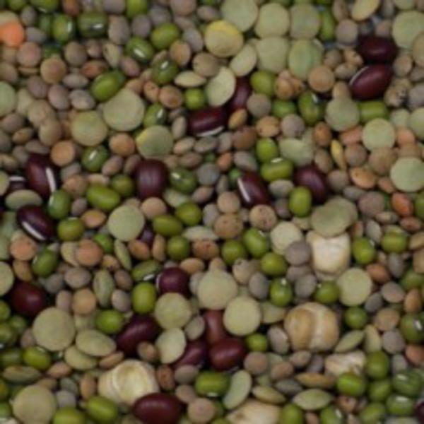 Bean Mix Sprouting ORGANIC