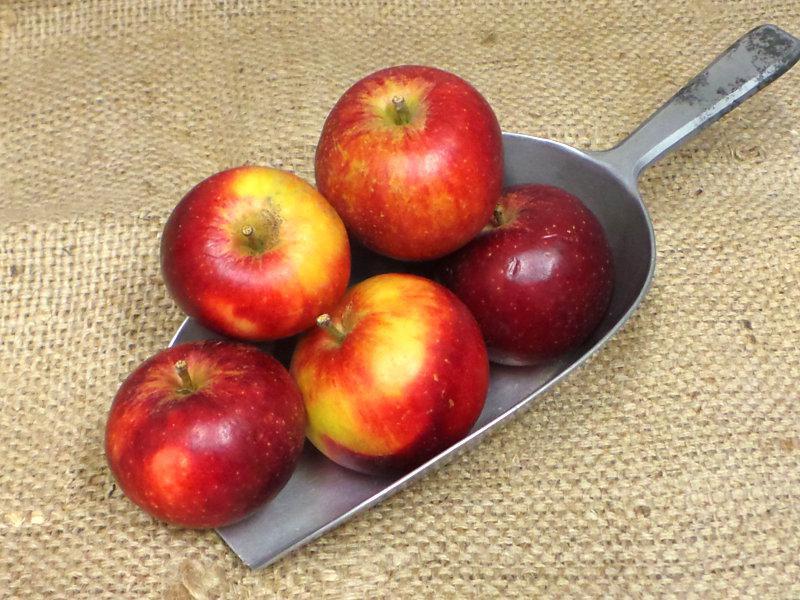 Red Devil Apples ORGANIC