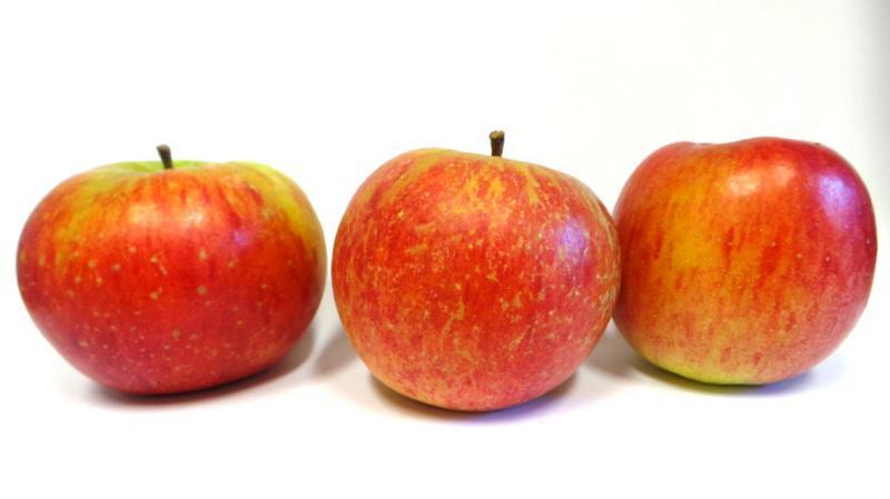 Lambourne Apples ORGANIC