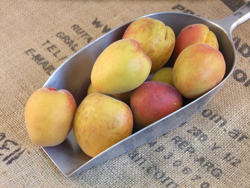 Apricot ORGANIC
