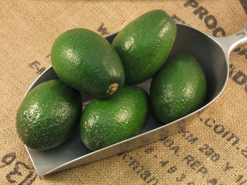 Fuerte Avocado Green ORGANIC