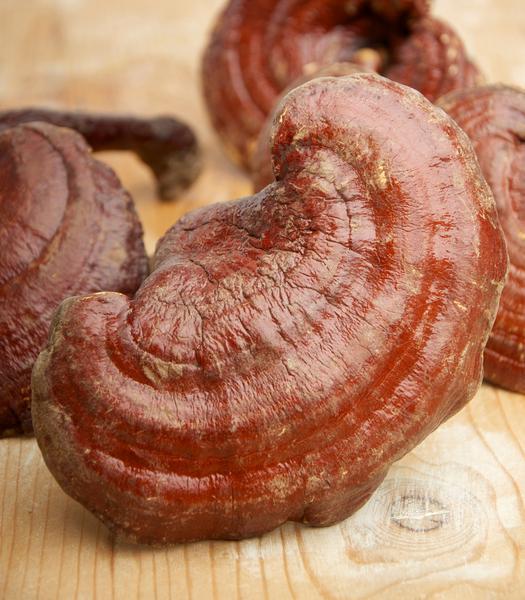 Reishi Mushrooms Powder dairy free, ORGANIC