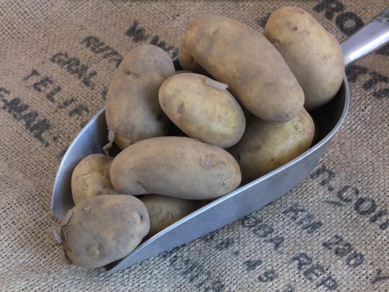 Jersey Royal Potato UK ORGANIC