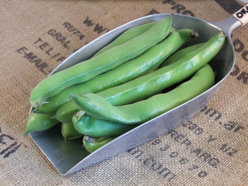 Broad Beans ORGANIC