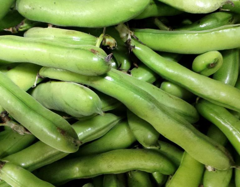 Broad Beans ORGANIC image 2