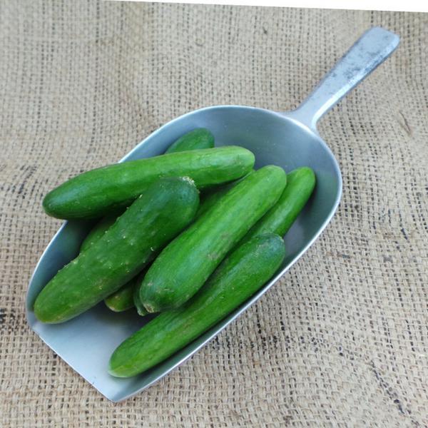 Cucumber Mini ORGANIC