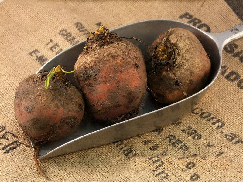 Beetroot Golden UK ORGANIC