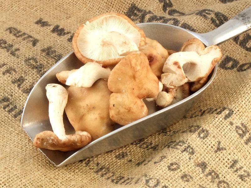 Shiitake Mushrooms ORGANIC image 2