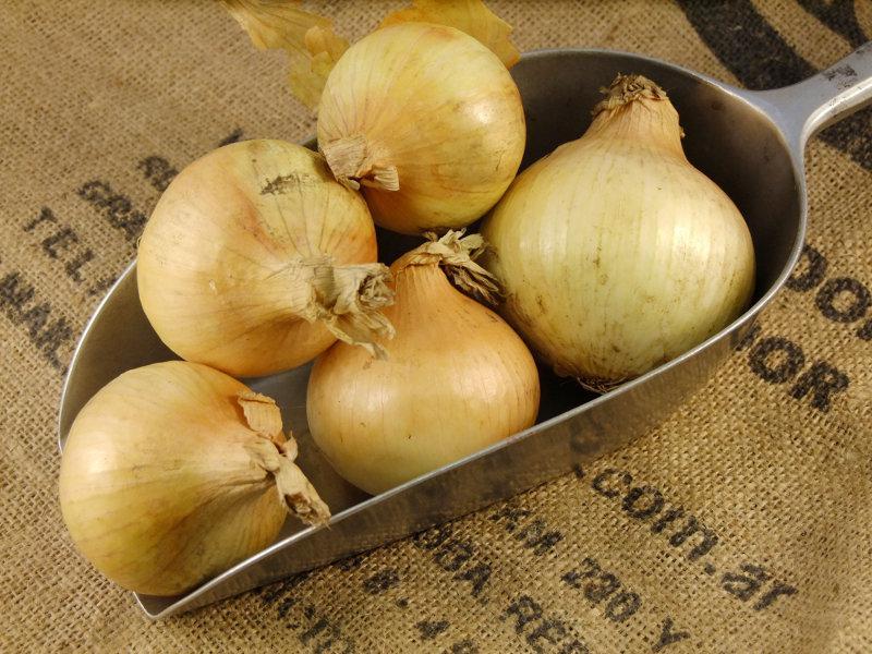 Onions ORGANIC