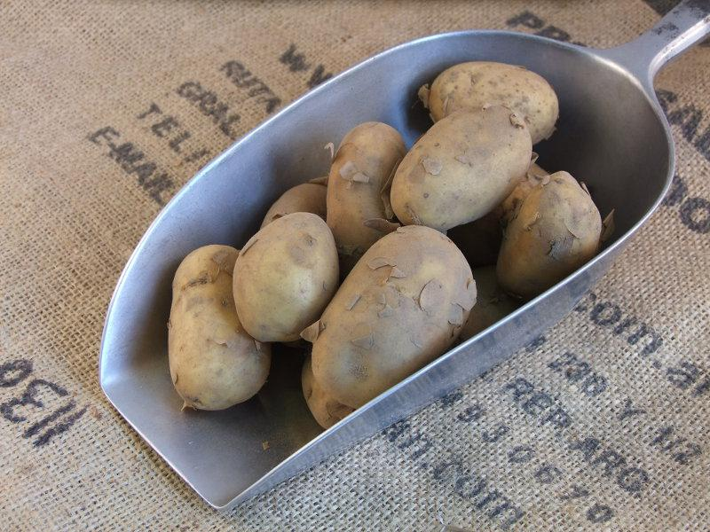 Charlotte Potato UK ORGANIC