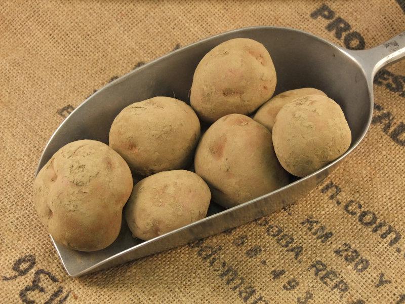 Potato Robinta ORGANIC