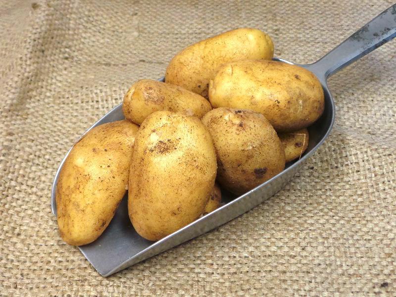 New Potato Nicola ORGANIC