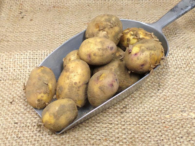 Kestrel Potato ORGANIC