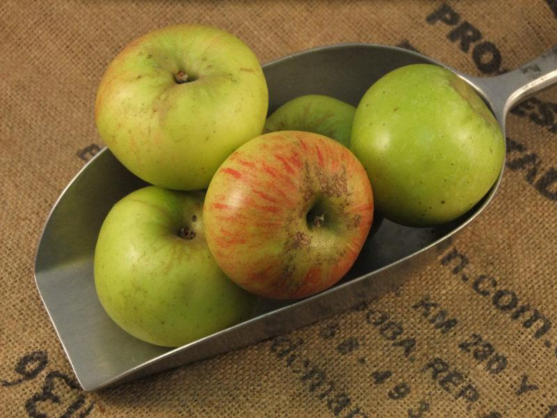Bramley Apples ORGANIC