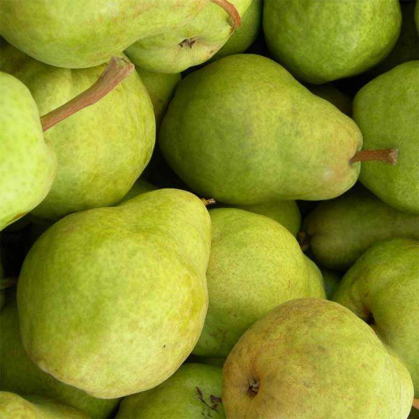 Williams Pears ORGANIC
