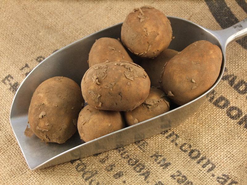 Maris Peer Potato ORGANIC