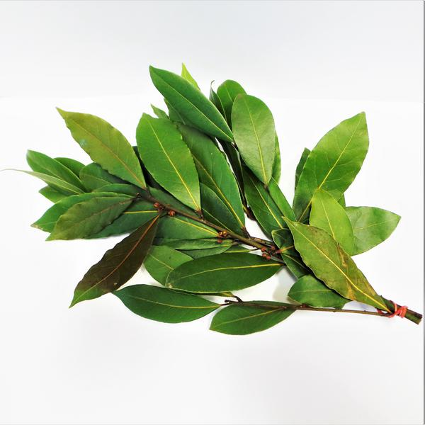 Fresh Bay Leaves ORGANIC