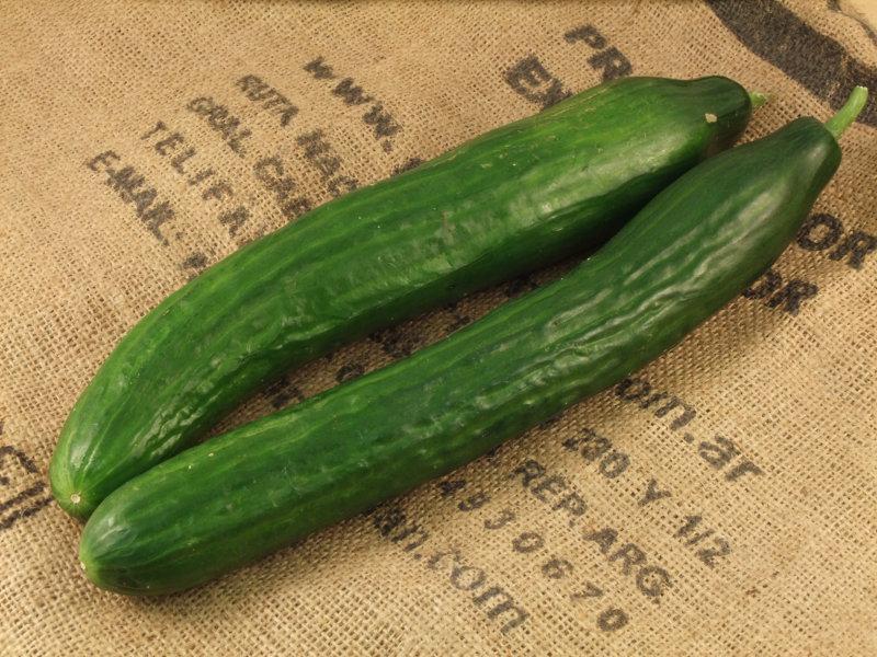 Cucumber UK ORGANIC