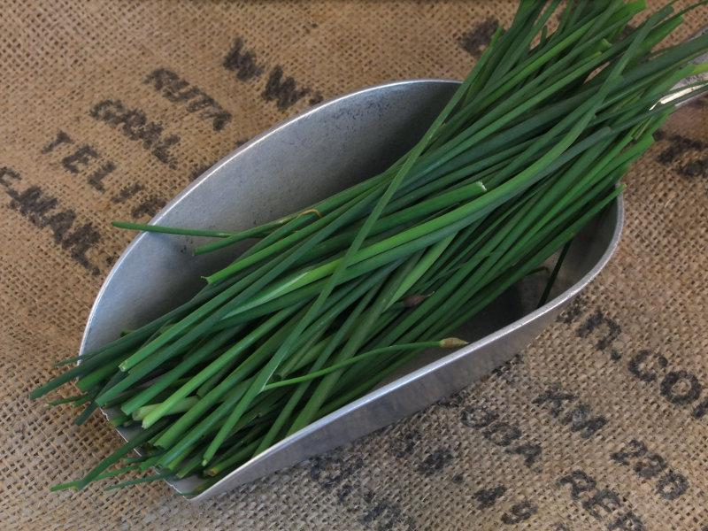 Fresh Chives Scotland ORGANIC