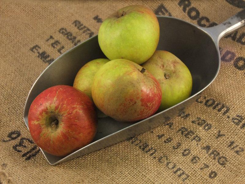 Cox's Apples ORGANIC