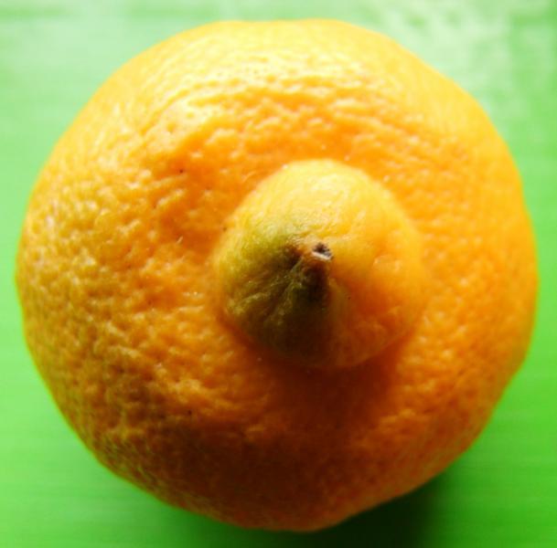Lemon Bergamot ORGANIC