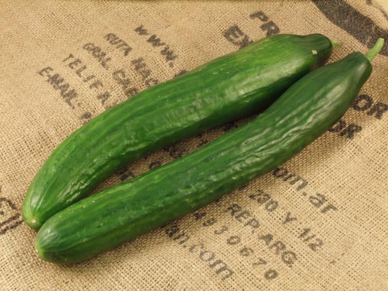 Cucumber ORGANIC