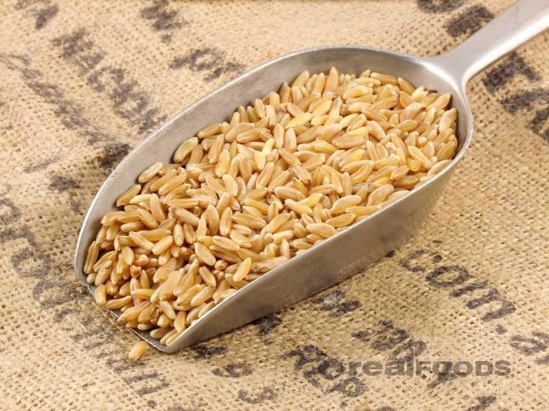 organic kamut grain from real foods buy bulk wholesale online