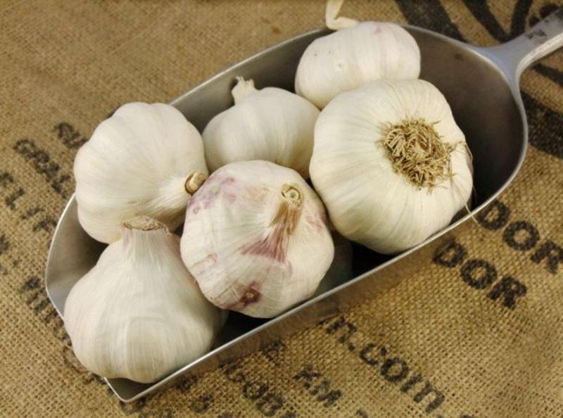 Garlic ORGANIC image 2