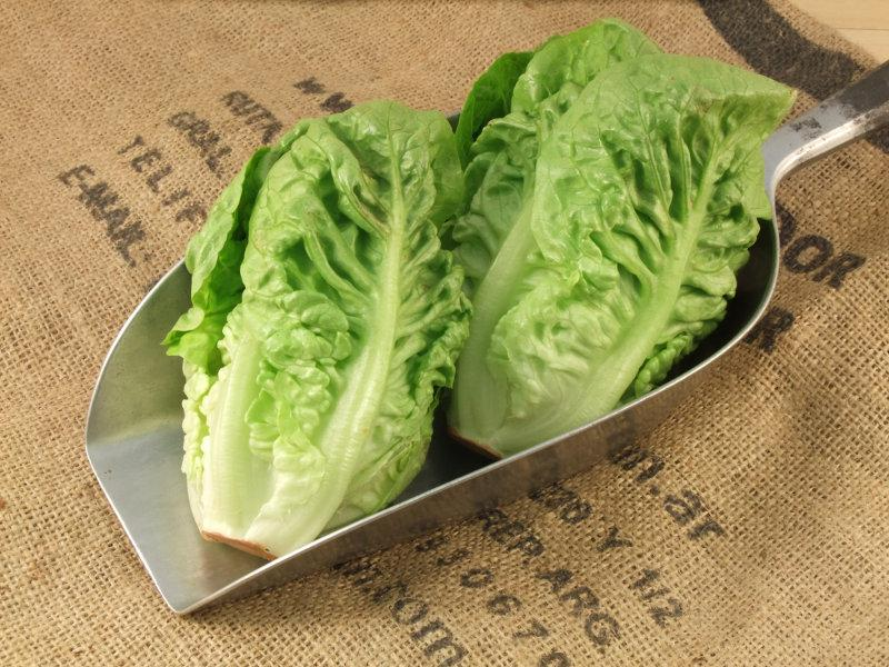 Little Gem Lettuce UK ORGANIC image 2