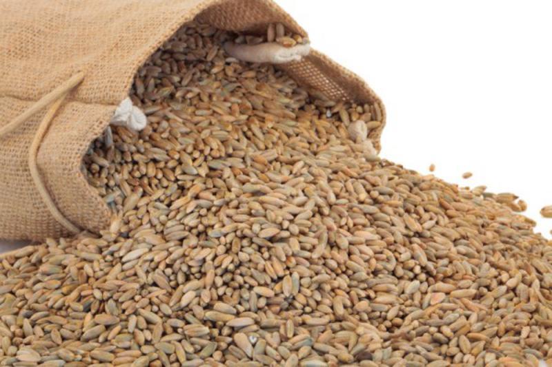 Organic Rye Grain from Real Foods Buy Bulk Wholesale Online