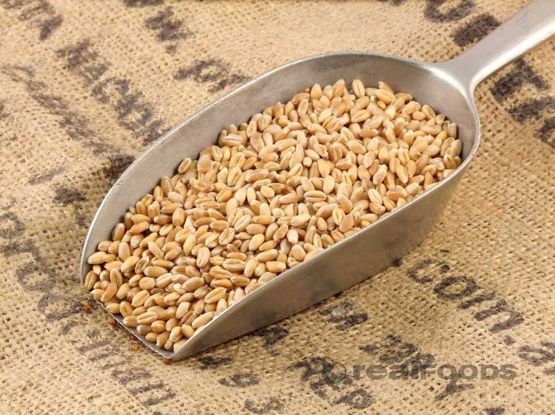 Organic Wheat Grain from Real Foods Buy Bulk Wholesale Online
