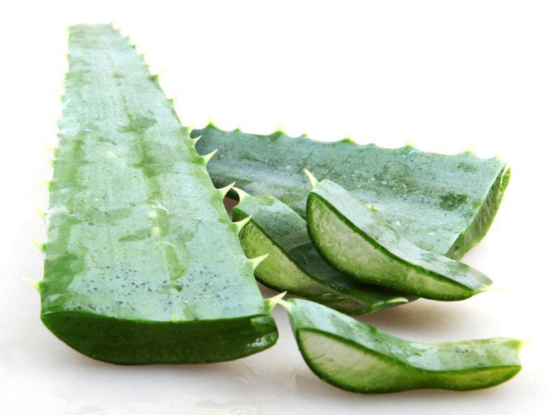 Aloe Vera Leaf Large ORGANIC image 2