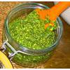 Raw Vegan Wild Garlic Spring Greens Pesto Recipe thumbnail image