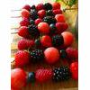 Raw Fruit Kebabs Recipe thumbnail image
